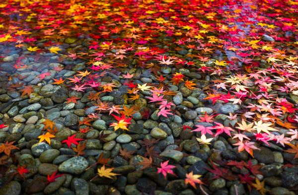 happiness autumn shutterstock