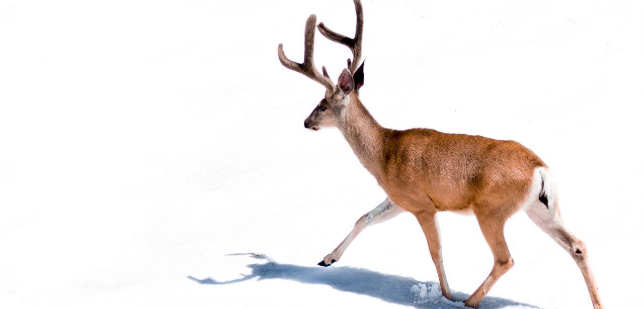 OOTD: Animal print on print